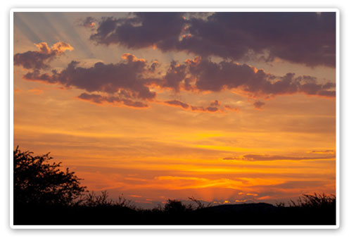 African Sunset Buffalo Thorn Lodge Malaria Free Big Five Pilanesberg Game Reserve Accommodation Booking