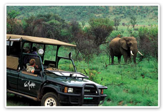 Game Drives Kwa Maritane Bush Lodge Luxury Accommodation Pilanesberg Game Reserve Accommodation Booking