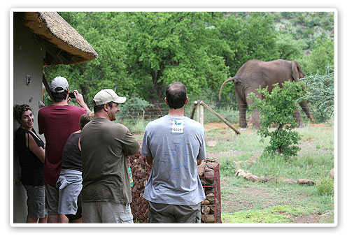 Accommodation Booking Elephant Pilanesberg Private Lodge Luxury Accommodation Malaria Free Big Five Black Rhino Reserve Pilanesberg Game Reserve