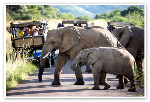 Elephants,Game Drives,Shepherd's Tree Lodge,Malaria Free,Big Five,Pilanesberg Game Reserve,Accommodation Booking