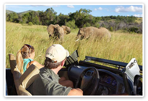 Elephant Sighting,Game Drive,Shepherd's Tree Lodge,Malaria Free,Big Five,Pilanesberg Game Reserve,Accommodation Booking