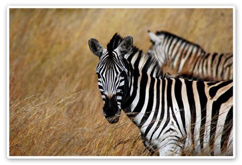 Pilanesberg Safari Accommodation Bookings Big 5